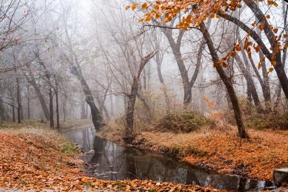 podzim zima příroda tisková velikost